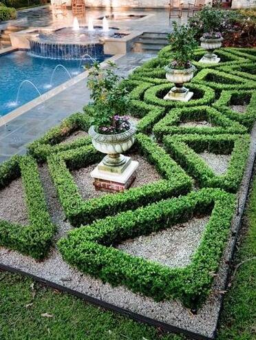 庭院景观乔木手绘